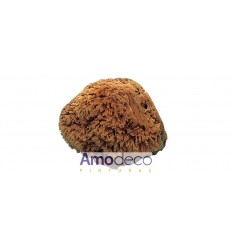 NATURAL SPONGE FOR DECORATIVE EFFECTS